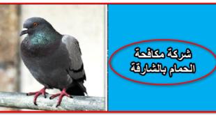 شركة تركيب طارد الحمام بالشارقة - شركات طارد الحمام - شركة طارد الحمام - شركة مكافحة الحمام - شركة مكافحة الحمام والطيور - شركة مكافحة الحمام والطيور